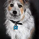 Dougie - Pet Portrait by  Linda Callaghan