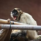Aghh!!!  George, Don't Be A Monkey's Ass! by Bevlea Ross