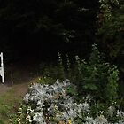 white flowers/3 x white chairs -(120811a)- digital panorama photo by paulramnora