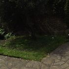 white flowers/3 x white chairs -(120811b)- digital panorama photo by paulramnora