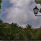 Palm City by Janone