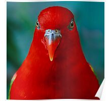 Chattering Lory II Poster