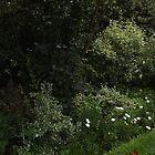 white chair with long winding path -(120811)- digital panorama photo by paulramnora