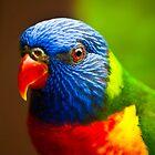 Rainbow Lorikeet V Detail by Damienne Bingham