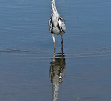 Grey Heron by KAREN SCHMIDT