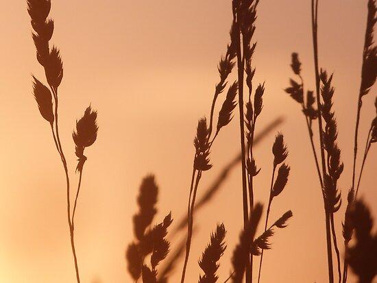Evening Gold by John Dunbar