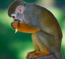 A monkey huddled over his prize by Mark Johnson