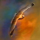 Freedom.... by andy551