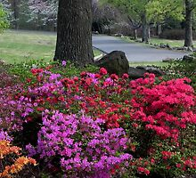 Azaleas at Honor Heights Park by bannercgtl10