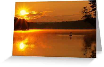 Lake Sunrise with Swan by Michael Mill