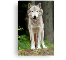 I'll huff and I'll puff and......just look cute! Metal Print