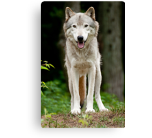 I'll huff and I'll puff and......just look cute! Canvas Print