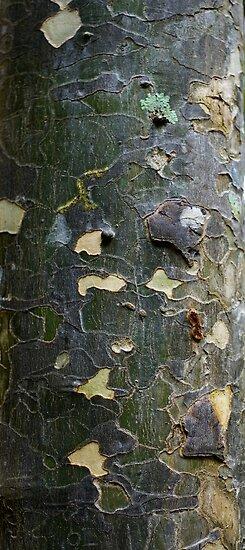 Textures - Tree bark, Mt Mee by Jordan Miscamble