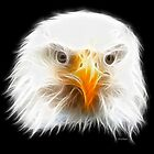 Bald Eagle- by Liane Pinel by Liane Pinel
