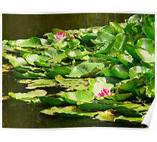 Waterlily memories Poster