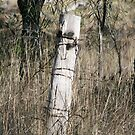 Old Fence Post by aussiebushstick