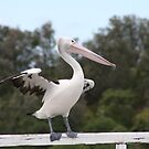 pelican by Sherie Howard
