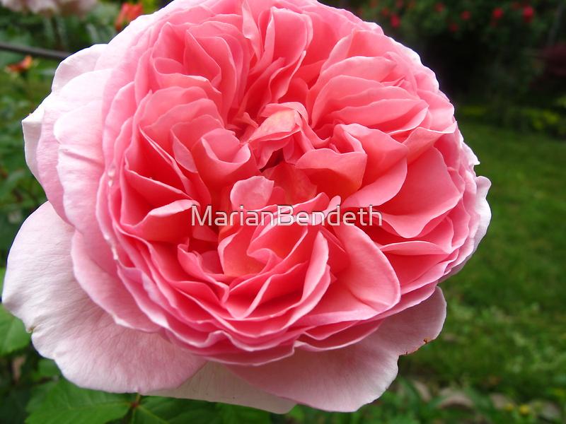Rose florets by MarianBendeth