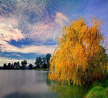 Golden Willow - Lake Barham by Hans Kawitzki