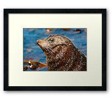 Sea Lion portrait New Zealand Framed Print