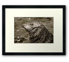 Sea Lion Portrait B & W New Zealand Framed Print