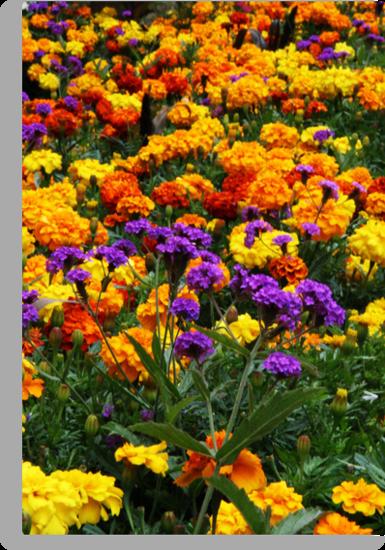 Flowers by Roxy J