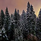 Just A touch Of Color by Charles & Patricia   Harkins ~ Picture Oregon