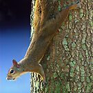 Squirrel Pause by Glenn Cecero