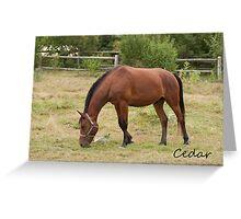 Cedar - NNEP Ottawa, ON Greeting Card
