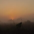 Foggy Sunrise in the Everglades by Kim McClain Gregal