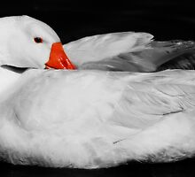 Daisy Duck by chloemay