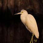 Heron of the Cypress Swamp by naturalnomad