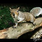 Cheeky Chap - A Grey Squirrel by angelimagine