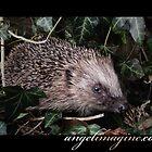 Hedge Pig - Hedgehog. by angelimagine