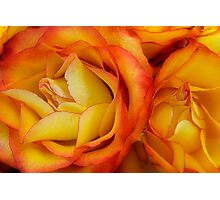 Twin Yellow Roses Photographic Print