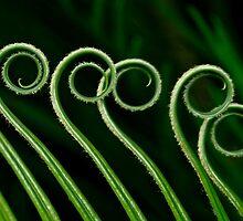 Sago curls by Celeste Mookherjee