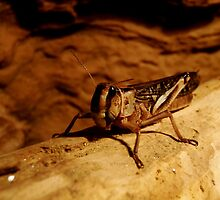 Grasshopper by Frrreeze tha Moment