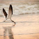 """Skimming The Water"" - black skimmer by John Hartung"