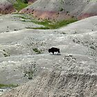 Badlands 3 - Bison by dandefensor