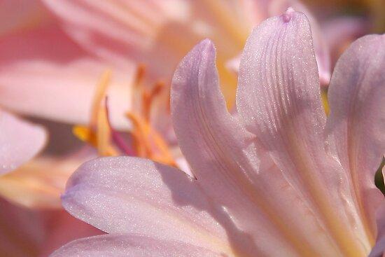 Shining In The Sun by NatureGreeting Cards ©ccwri