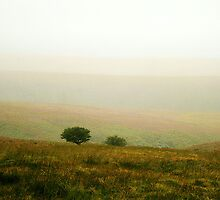 Mist Over Exmoor by patrixpix