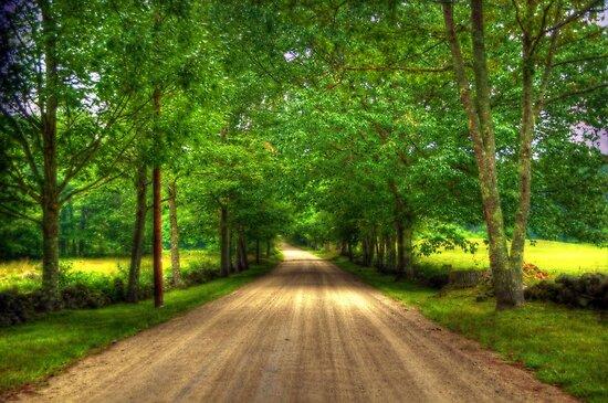 Jones Road by Monica M. Scanlan