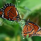 Twin butterflies by jozi1