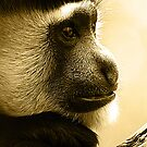 primate moment by Steve Scully