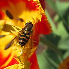 Fly on a tulip by Irina777