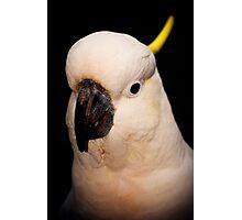 Portrait of a Cockatoo Photographic Print
