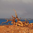 Nature's Sculpture -Wagait Beach NT by outbackwriter