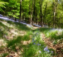Bluebells - Blakeney Walk by David Tinsley