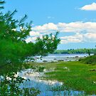 Toddy Lake, on the way to Ellsworth, Maine by fauselr