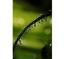 Green Fuzz Photographic Print